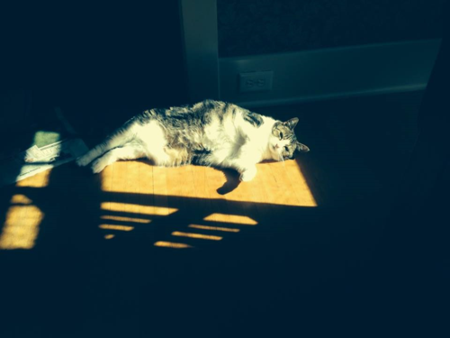 Miss Darcy, Cat of the Sun