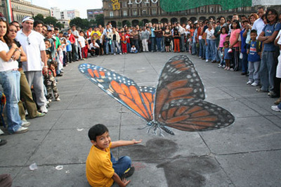 Beever_butterfly_2